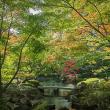 2017.11.02 杉並区 荻窪3 大田黒公園: 秋景色!