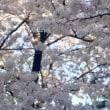 春の便り~スタッフブログ~