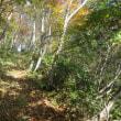 6 鷲峰山(921m:鳥取県鳥取市)登山(続き)  紅葉を楽しみつつ