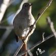 Pちゃんの野鳥観察。
