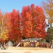 総合グラウンドの紅葉