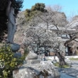 「長谷寺」を楽しむ