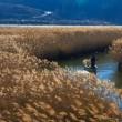 北上川の葦原の秋景