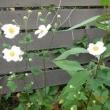 花の力・池坊展と映画「エタニティ 永遠の花たちへ」