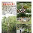 花壇-40 新宿中央公園②