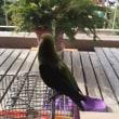 遊び好きな小鳥のフー太郎