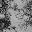 モノクロームの森