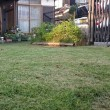 芝刈り  暑い!!