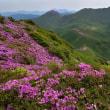 くじゅう、山開きの日の登山p11(稲星山を下りて鞍部から白口岳山頂まで)