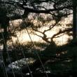●1月の兼六園(3)紅梅 冬桜 瓢池の鯉 海石塔 霞が池 徽軫灯籠 蓬莱島 夕日