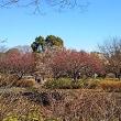 昭和記念公園 花便り 2月14日