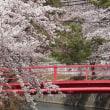 ~圧倒的桜。2018~