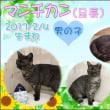 またも!?New Cat ฅ(=^・ω・^=) ฅ