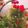 薔薇の咲く家