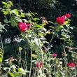 残暑厳しい中、除草と花摘み