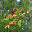 岩湧山☆小さな秋見つけた