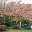 鶴岡公園の紅葉 2018年 11月