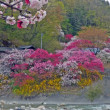 日本一の花桃の里 南信州阿智村へ!