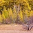 山岳点景:黄金の森