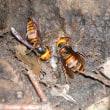 スズメバチ 予防と対策