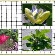 花壇に咲いてる花