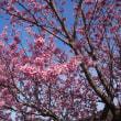 四季の道の桜