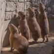 ☆ガンモの群れはほのぼの〜伊豆シャボテン動物公園〜