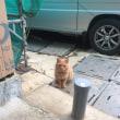 新築リポート 猫もお気に入りのお家
