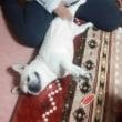 犬の抱っこ紐と消臭剤