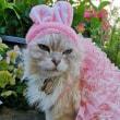 ウサギになれない猫