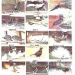 デジブック 『大けやきのアオバズク』と「鳥の郷」