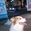 久しぶりの京都駅