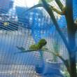 レモンの木保育園の朝
