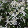 賀茂川河川敷で咲いていた花