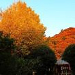 『楓蔦黄』 高来神社