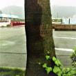 三原港あたり