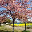 2018年名古屋市小学校入学式4月6日(よしだ麺)