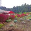 秋色に染まるモナの丘