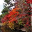 仕方ない。。宿題でもするか・・池に映える紅葉