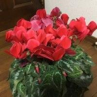 部屋の花♪