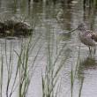 小雨のなかで水鳥に会いに!