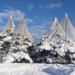 冬の兼六園 ②