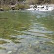 福井県の渓流へ出かけました