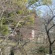いきいきガーデン倒木伐採