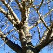 冬空に映える樹形