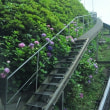 フレンドパーク・こさのぼ・紫陽花