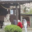 ☆八幡神社の桜☆