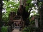 日帰り熱海、巨樹に会う旅