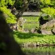 小石川後楽園にてカワセミに会えました!