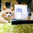 お母ちゃんが毛糸で何かを作り始めると邪魔する2匹の猫